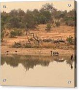 Reflections On Safari Acrylic Print