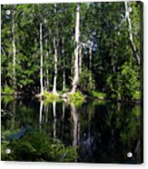 Reflections On The Ocklawaha River  Acrylic Print