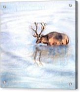 Reflective Acrylic Print