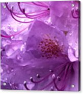 Refreshing Rain Close Up Acrylic Print