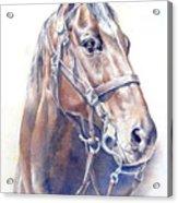 Regal  A Cavalry Horse Portrait Acrylic Print