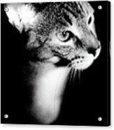 Regal Feline Acrylic Print