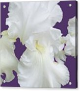 Regal Iris  Acrylic Print