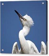 Regal Snowy Egret Acrylic Print