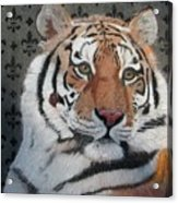 Regal Tiger Acrylic Print