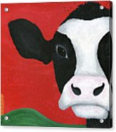 Regina The Happy Cow Acrylic Print by Kristi L Randall