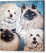 Reigning Cats N Dogs Acrylic Print