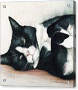 Relaxed Tuxedo Acrylic Print