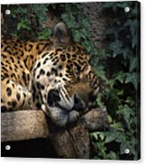 Relaxing Acrylic Print by Ernie Echols