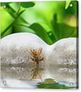 Reflected Little Stinger Taking A Sip 2 By Chris White Acrylic Print