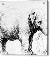 Rembrandt: Elephant, 1637 Acrylic Print