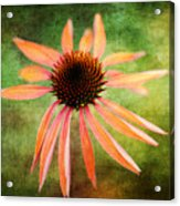 Remembering Summer Acrylic Print