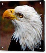 Reminiscent Bald Eagle Acrylic Print