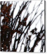 Remnant Acrylic Print