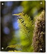 Renewal Ferns Acrylic Print by Mike Reid