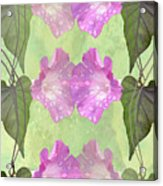 Repeated Morning Glories Acrylic Print
