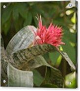 Reptile Garden II Acrylic Print
