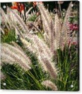 Reptile Garden Plantsi Acrylic Print
