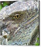 Reptilian Acrylic Print