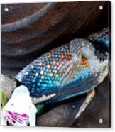 Requiem For A Rainbow Lizard Acrylic Print
