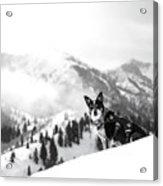 Rescue Dog Acrylic Print