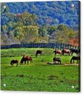 Rescue Horses Acrylic Print