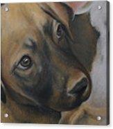 Rescue Pup Acrylic Print