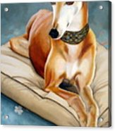 Rescued Greyhound Acrylic Print by Sandra Chase