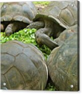 Reservations For Five Acrylic Print