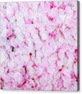Resting Cherry Blossom Petals Acrylic Print