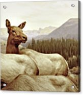 Resting Deer Acrylic Print