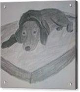 Resting Dog Acrylic Print