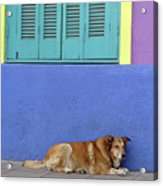 Resting In Boca Acrylic Print