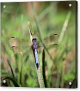 Resting In The Green Acrylic Print