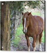 Resting In The Shade Acrylic Print