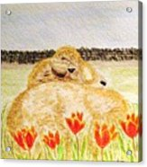 Resting In The Tulips Acrylic Print