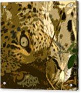 Resting Leopard Acrylic Print