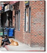 Resting On The Corner Acrylic Print