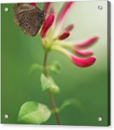 Resting On The Pink Plant Acrylic Print
