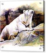 Resting Polar Bear Acrylic Print