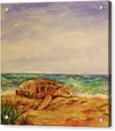 Resting Sea Turtle Acrylic Print