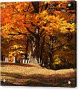 Resting Under Maples Acrylic Print