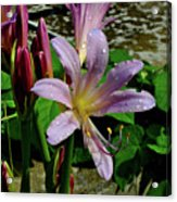 Resurrection Flower Acrylic Print