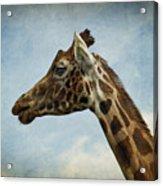 Reticulated Giraffe Head Acrylic Print