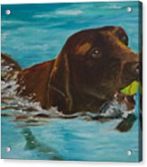 Retriever Play Acrylic Print