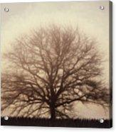 Retro Foggy Tree Acrylic Print