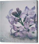 Retro Lilac Flower Acrylic Print