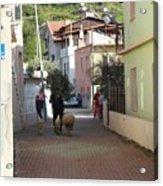 Returning Home With Sheep And Lambs In Bozburun Acrylic Print