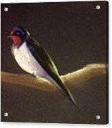 Returning Swallow Acrylic Print