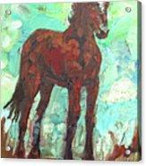 Rezpony Acrylic Print